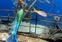 Meerjungfrau und Sirenen