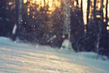 .winter.autumn.summer.spring