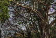In african gardens / Gardens in Bahir Dar Ethiopia
