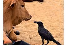 LENES PHOTOS - animals