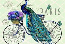 ~Peacock~
