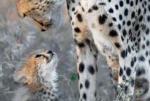 Animal pics for tex