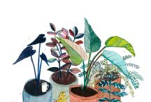 Elizabeth Barnett / Illustration