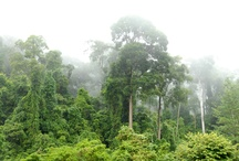 Important Things / The rainforest.