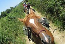 Vacances à cheval en Saône-et-Loire / Vacances à cheval en Saône-et-Loire