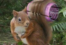 animals - squirrels & pups