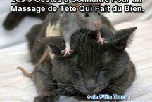 Massage _ maux de tête