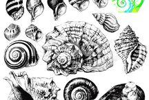 Seashell Tattoos / Tatoo Ideas