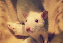 rats<3