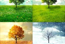 Le 4 stagioni..