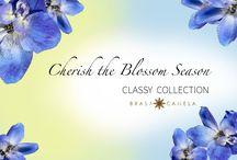 Blossom Season