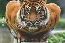 || Wildlife ||♡