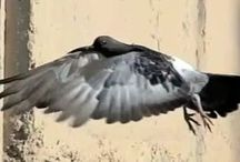 Bird Anim Ressources
