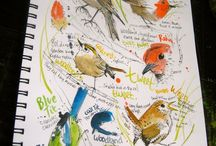 A life of Birds Sketchbook / Bird sketchbook A life of Birds michellecampbellart.com