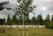 Planting / Tree planting