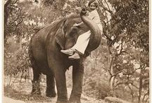Everything Elephants! / by Madeline Black