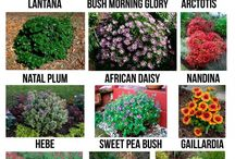 Drought-Tolerant Plants / Live in a dry area? Don't worry! These dought-tolerant plant and gardening ideas will keep your green thumb growing