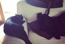 Lana&Brian / Cats