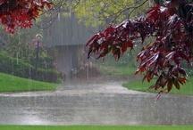 Rain #1 / by Judith Hindall
