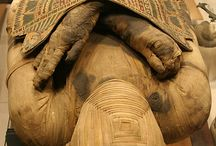 Egyptian Rituals/Traditions