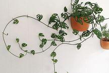 식물에 관한 아이디어