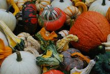 Create // Going Gaga for Gourds