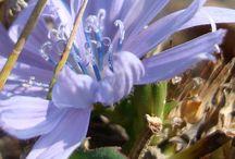 Centro flor cekeste