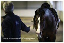 Horses-training