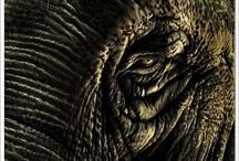 Elephants / by Melba Herrera