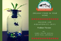 Aquaponics / Aquaponics Ideas and designs