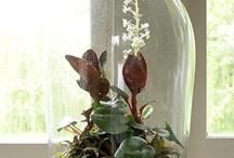 Květiny doma