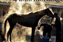 Equestrian / by Jillian Stroh