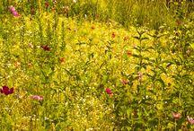 Wild Flower / Do you feel wild?
