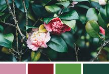 Everyday Inspiration / Take inspiration from the colours of the world around us. Colour palettes and colour schemes.
