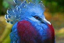 Feathered folk