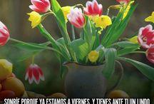 FELIZ VIERNES! Imágenes para Whatsapp <3 #viernes #feliz / Imágenes de Feliz y Bendecido Viernes. Geniales para estados y perfil de Whatsapp ➡️ http://fantrule.com/frases/imagenes-buenos-dias-viernes