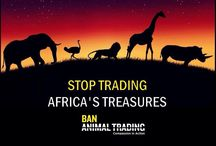 Save African Animals / Save Zimbabwe Elephants from being exported to Chimelongsafaripark China