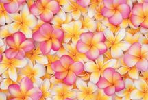 Frangipani e tanti fiori