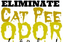 Cat odor remove
