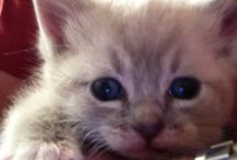 Meet Gracie, the newest member of our family / Kitty pictures / by Michael Morris