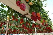Gemüse Obst Garten