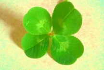Four leaves or clover / by Olga Uaio