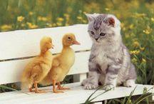 Ducks plus