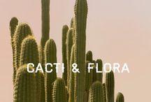Cacti & Flora