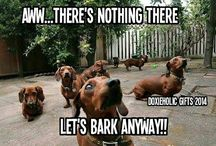 Weiners! / Sausage dogs!!!