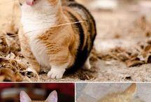 Derp Cat Faces