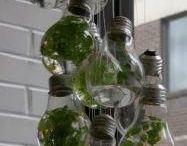 Glazen terarium