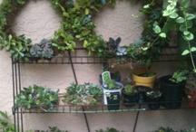 Gardening / by Carolyn Green