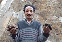 Search for Shilajit / Johann Helf, owner of Lotus Blooming Herbs, personally visits te Himalayas to find the purest and most potent shilajit. He and his motorcycle trek the high altitudes of the ancient mountains in search for new sources to meet the high demand for this Ayurvedic mineral supplement.