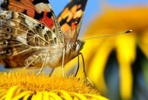Perhoset ja niiden ravinto